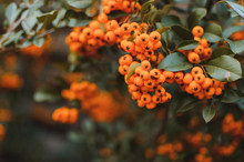 Autumn Background With Orange ...