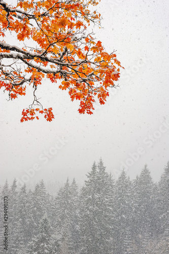 First snow in the forest in the mountains
