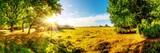 Wunderschöne, verträumte, herbstliche Landschaft mit weiten Wiesen und großen Eichenbäumen im Licht der aufgehenden Morgensonne
