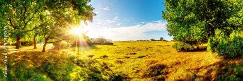 Papiers peints Miel Wunderschöne, verträumte, herbstliche Landschaft mit weiten Wiesen und großen Eichenbäumen im Licht der aufgehenden Morgensonne