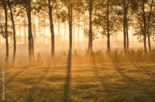 早朝の防風林 Canvas Print
