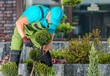 Leinwandbild Motiv Maintaining Garden Trees Shape