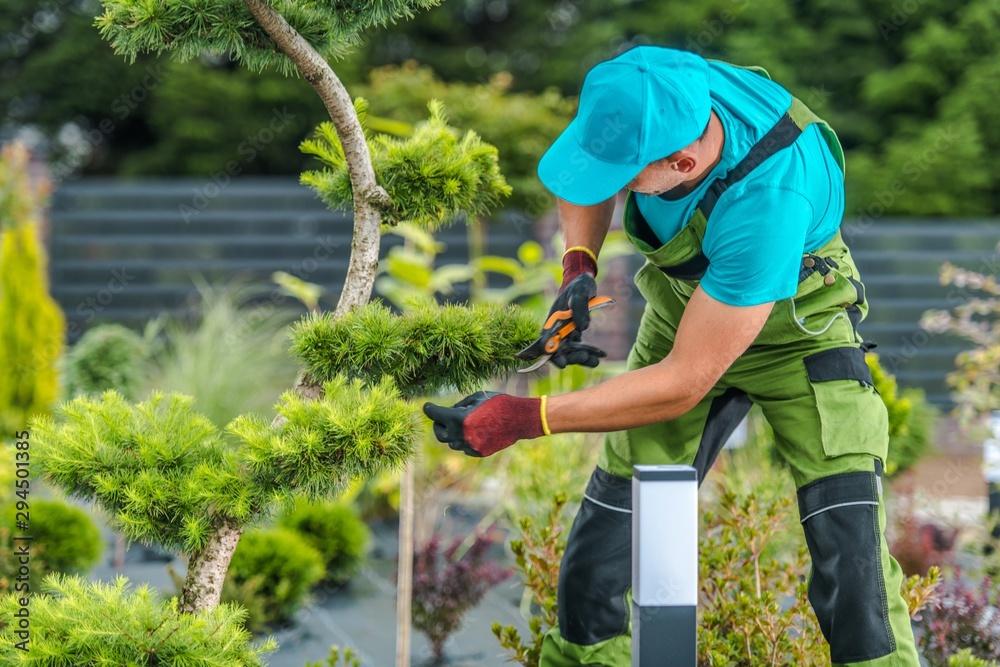 Fototapety, obrazy: Trimming Backyard Garden Plants