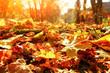 canvas print picture - Goldener Herbst