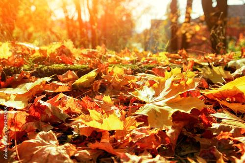 obraz lub plakat Goldener Herbst