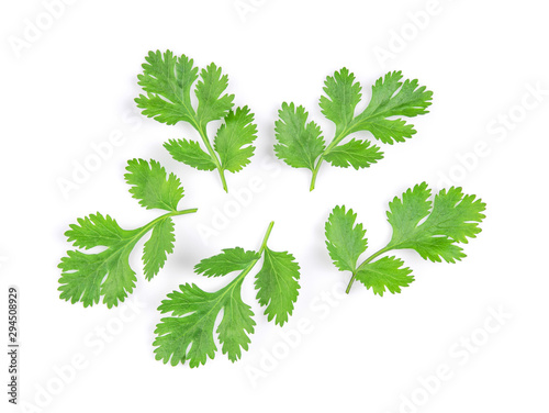 Fototapeta Green coriander leaves close-up, isolation on a white background. top view obraz