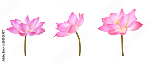 Poster de jardin Fleur de lotus Lotus flower isolated on white background.