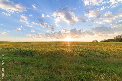 Fototapeta Sunrise Over Field obraz