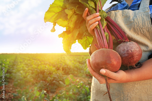 Fotografie, Obraz  Female farmer with gathered beetroots in field