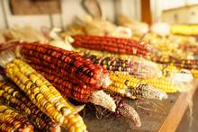 Indian Corn From The Fall Harv...