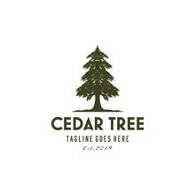 Ilustration Rustic Retro Vintage Evergreen, Pines, Spruce, Cedar Trees Logo Design