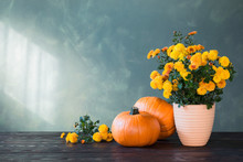 Chrysanthemums And Pumpkins On Green Background