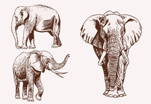 Vintage Set Of Elephants, Graphical Vector Illustration,savanna Animal
