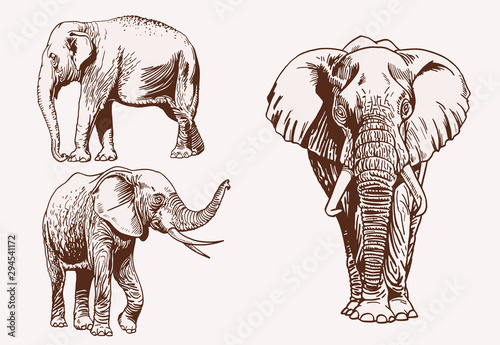 Vintage set of elephants, graphical vector illustration,savanna animal Wallpaper Mural