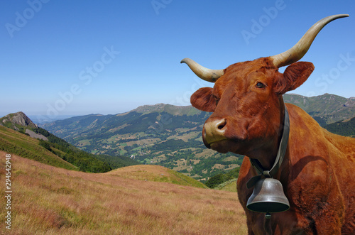 Vache Salers avec sa cloche en estive dans les montagnes d'Auvergne Fototapet