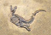 Tyrannosaurus Rex Fossil, Sele...