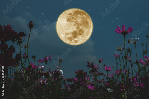 Fotografía Dark cosmos flower with full moon at night.