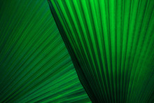 Tropical Palm Leaf And Shadow, Abstract Natural Green Background