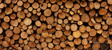 Background From Round Dry Firewood In A Pile For Kindling A Stove
