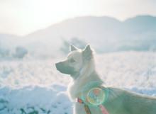 雪の日の散歩