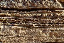 Sectional Sedimentary Rocks Te...