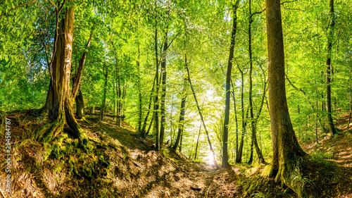 Fotografia  Vom Licht der Sonne durchfluteter Wald wie aus dem Märchen mit zwei alten Bäumen
