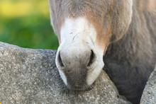 Donkey Head Funny Gray Donkey ...