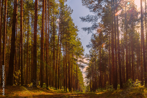 Foto auf Gartenposter Wald On a sunny forest road.
