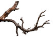 canvas print picture - Branch of dead tree isolated on white background with clipping path