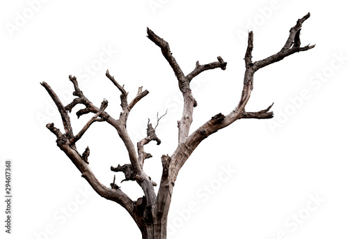 Dead tree isolated on white background with clipping path Obraz na płótnie