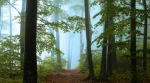 Panoramic Trail In Foggy Forest. Creepy Light Inside The Forest During Autumn Misty Morning