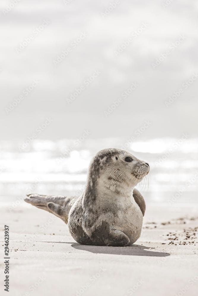 Kleine Robbe am Strand