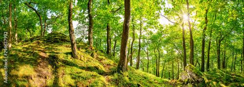 Fotografia  Wunderschöner Wald mit alten Bäumen, einem weißen Felsen im Vordergrund und stra