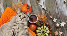 Cute Cat, Pumpkins, Cups, Ligts, Sweater On Autumn Background.