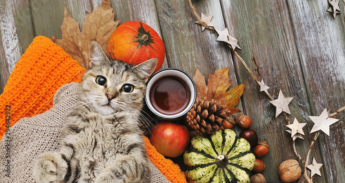 Cute cat,. pumpkins, cups, ligts,sweater on autumn background.