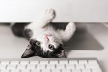 Small Cat Looking At Camera