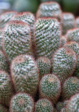 Barrel Cactus Group