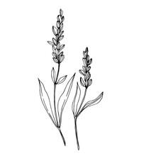 Vector Wildflower Floral Botan...