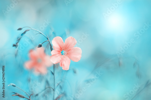 Foto op Plexiglas Weide, Moeras Beautiful pink flax flower on a turquoise blue background, toned image. Natural spring art background. Selective soft focus.