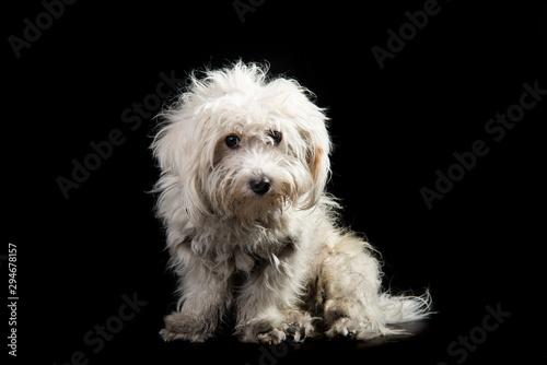 Fototapeta  abandoned dog dirty