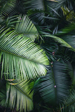 Green Palm Tree Leafs Background