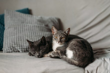 Two Sleepy Cats On Bed