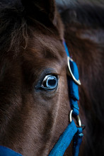 Blue Eye Of A Horse