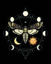 Vector Illustration Of Death Head Hawk Moth