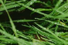 Macro Details Of Plants