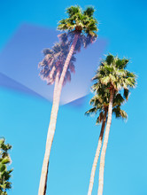Palm Trees Against Blue Sky With Mirrored Pink Shape