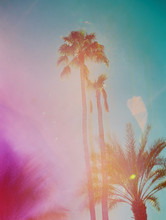 Palm Trees On Film With Pink L...