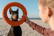 Girl With Playful Doberman Dog...