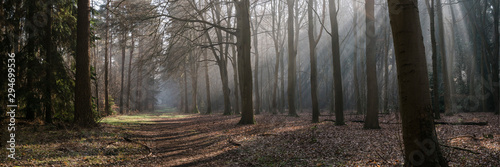 Shafts of light through mist from sunrise in woodland. Norfolk, UK - 294699536