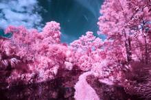 Black Water Creek Through Pink Trees